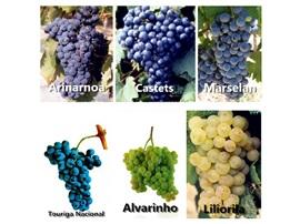 法國波爾多葡萄酒產區新增六種法定葡萄品種