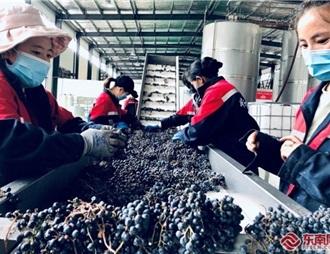 厦门援藏工作组助力左贡打造特色葡萄产业链